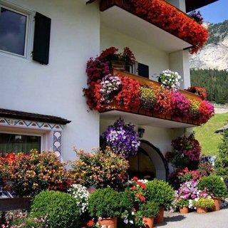 Idee decorare balcoane cu flori