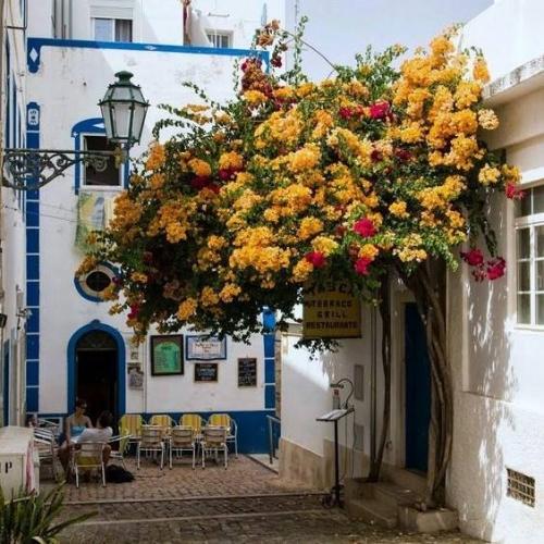 Intrare in casa cu flori galbene