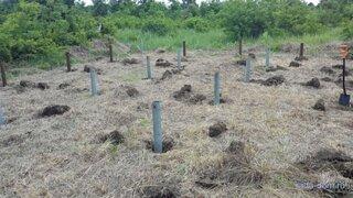 Montare piloni pentru fundatie