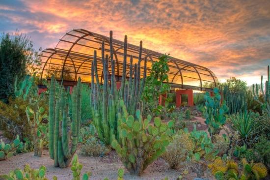 Gradina botanica in desert