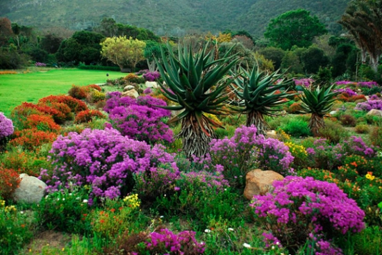 Gradina botanica Africa