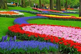 Gradina Keukenkof Olanda flori multicolore