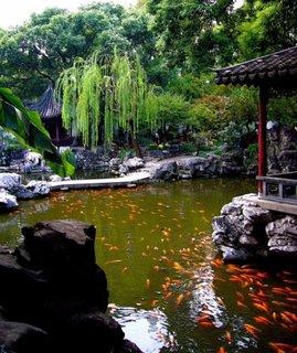 Iaz cu crap koi gradina Yuyuan China