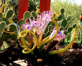 Specie de floare desertica Gradina Botanica Arizona