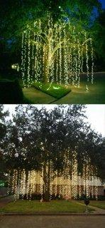 Salcie plangatoare cu instalatie LED