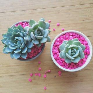 Idee infrumusetare ghivece flori