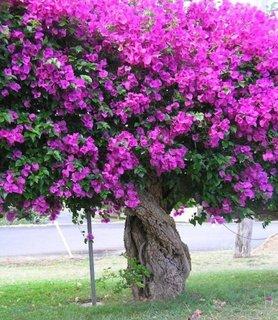 Copac cu flori mov