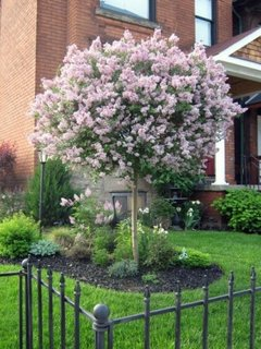 Gradina cu copac in floare