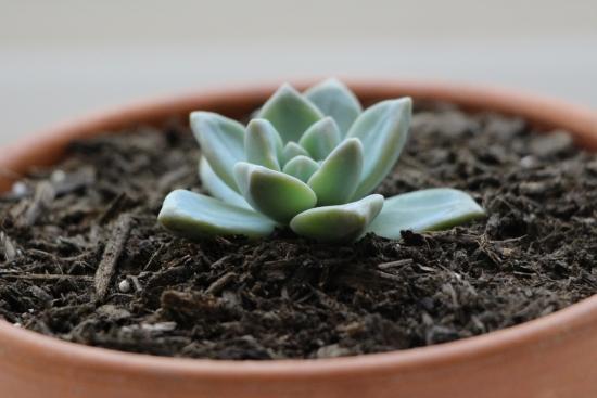 Vas cu planta suculenta mica