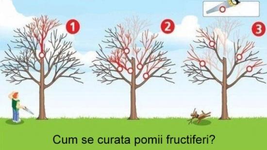 Curatare corecta la pomi