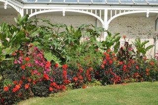 Bordura in gradina din dalii rosii talie pitica