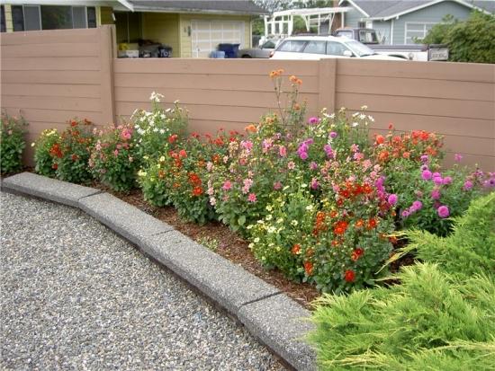 Gradinita langa gard plantata cu dalii si alte flori colorate