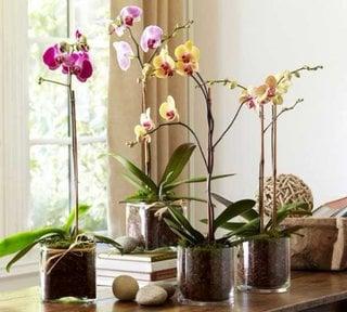 Ghivece transparente cu orhidee in interior