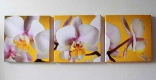 Tablouri murale cu orhidee