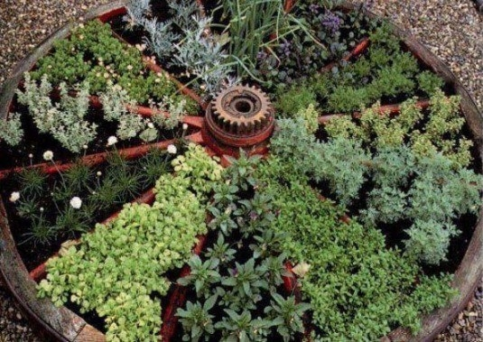 Plante aromate cultivate intr-o roata de caruta