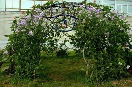 Suport in forma de bolta confectionat din roti de bicicleta pentru plante agatatoare