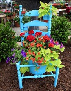 Scaun vopsit bleu folosit drept suport pentru flori in gradina