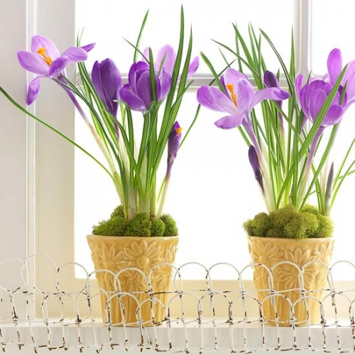 Decoratiune florala primavaratica ghivece cu flori mov