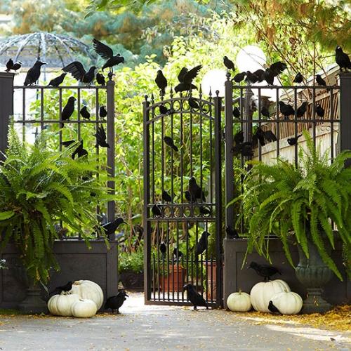 Gard cu pasari negre decorat pentru Halloween