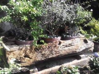 Idee pentru pastrarea bonsailor pe timp de vara afara pe terasa
