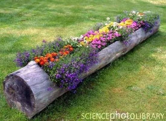 Idee pentru plantarea florilor pitice in gradina