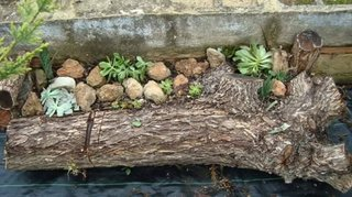 Jardiniera improvizata pentru plante grase