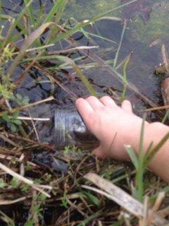 Umpleti borcanul cu apa proaspata de iaz