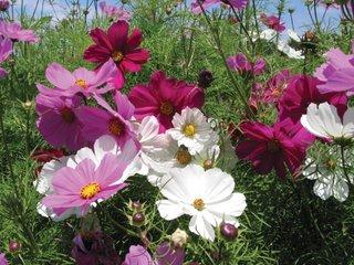 Fluturasi flori de vara in gradina