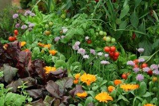 Flori care se pot planta langa rosii
