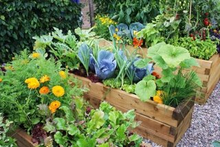 Gradina de legume si flori