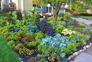 legume si flori care nu sunt compatibile