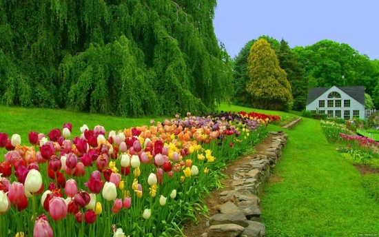 Flori de gradina care se planteaza toamna - flori de primavara