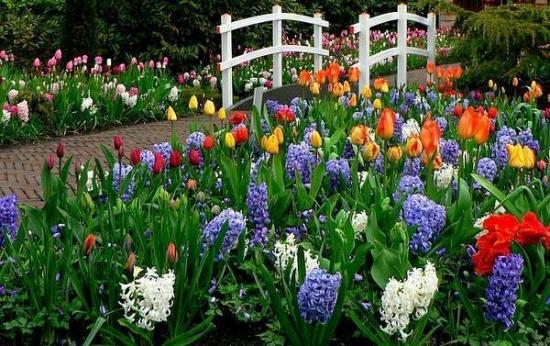 Florile de primavara pentru gradina