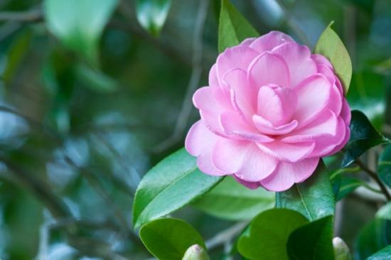 Florile de toamna pentru gradina