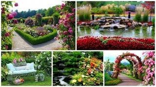 Flori de vara pentru gradini si curti