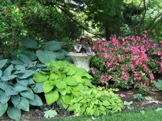 Crini diverse soiuri pentru gradini umbroase
