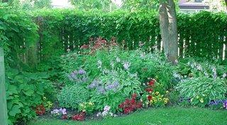 Selectie de flori pentru gradini cu umbra