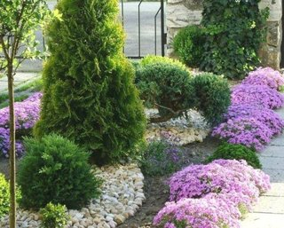 Arbusti ornamentali nepretentiosi amenajare gradina
