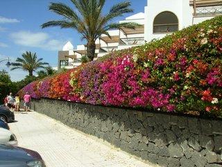 Gard stradal cu flori de zamosita hibiscus culori diverse