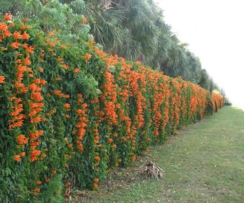 Gard viu cu flori portocalii