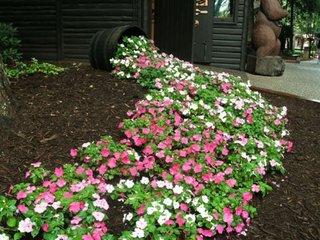 Ghiveci varsat cu flori albe si roz