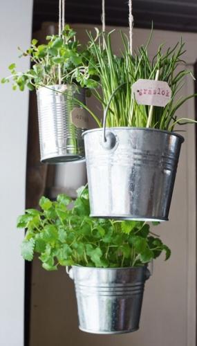 Galeti de metal cu plante in ele agatate de tavan
