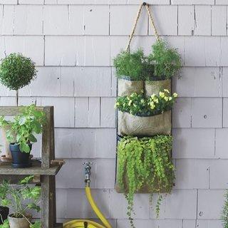 Plante suspendate pe perete in sacose de rafie