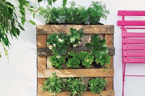 Gradina verticala DIY pentru balcon