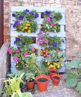 Gradina verticala cu flori de primavara