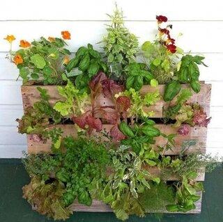 Gradina verticala din paleti cu legume verzi