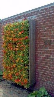 Gradina verticala din paleti prinsa pe zid