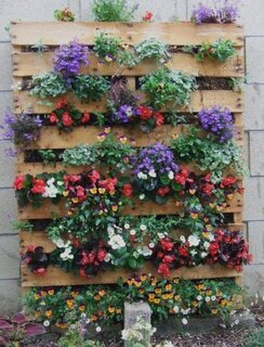 Palet din lemn transformat in gradina verticala cu flori colorate