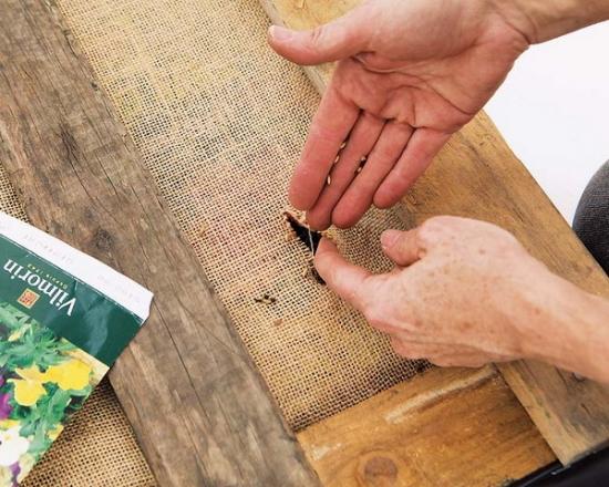 plantare seminte
