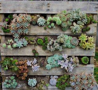 gradina verticala din paleti cu cactusi si plante grase